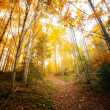 Beautiful autumn woods landscape — Stock Photo