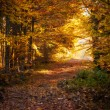 Beautiful autumn woods landscape — Stock Photo #16201133