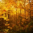Beautiful autumn woods landscape — Stock Photo #16201161