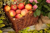 美味的苹果 — 图库照片