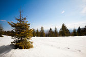 Beautiful winter sunny photo taken in mountains — Stock Photo