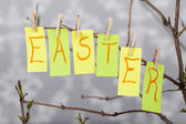 Easter captions — Stock Photo