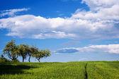 Belle prairie avec un ciel bleu — Photo
