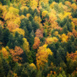 Beautiful autumn colorful woods landscape — Stock Photo #32503611