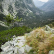 Stock Photo: Beautiful Tatry mountains landscape