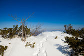 Beautiful winter sunny photo taken in Beskid mountains — Stock Photo