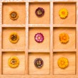 Shadow box with bright straw flowers — Stockfoto