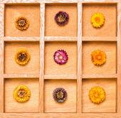 Gölge kutusu ile parlak saman çiçek — Stok fotoğraf