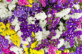Fresh flower bunches for sale at the market — Stock Photo