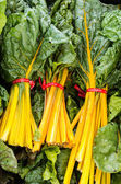 Yellow swiss chard on display — Stock Photo