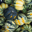 Carnival winter squash at the market — Stock Photo