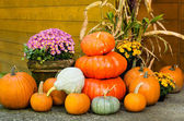 Fall decorations of pumpkins and flowers — Stock Photo