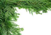 Border from evergreen boughs — Stock Photo