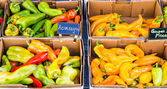 Boxes of fresh hot peppers — Stock Photo