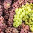 Fresh grapes on display — Stock Photo #15751599