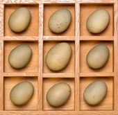 Shadow box with eggs — Stock Photo