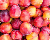 Fresh ripe plums on display — Stock Photo