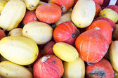 Display of winter squash for storage — Stock Photo