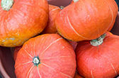 Orange hubbard squash for sale at the market — Stock Photo