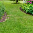 Stock Photo: Grass walkway through garden