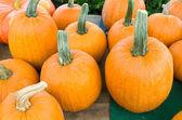 Display of fresh pumpkins — Stock Photo