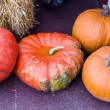 Stock Photo: Pumpkins and hubbard squash