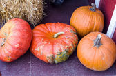 Pumpkins and hubbard squash — Stock Photo