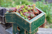 Sedum plants covering the roof — Stock Photo