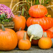 Display of fall pumpkin decorations — Stock Photo