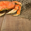 Stock Photo: Dungeness crab ready to cook
