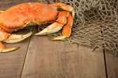 Dungeness crab ready to cook — Stock fotografie