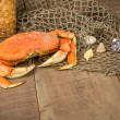 Dungeness crab ready to cook — Stock Photo #21696315
