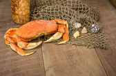Dungeness crab ready to cook — Stock Photo