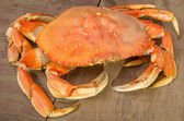 Dungeness crab ready to cook — Стоковое фото