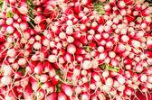 Fresh red and white radishes — Stock Photo