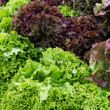 Stock Photo: Fresh leaf lettuce on display at the market