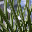 Crossed palm fronds in a pattern — Stock Photo