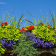 Flower box with blooming plants — Stock Photo