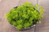 Fresh dill flowers in a bowl — Stock Photo