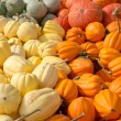 Stock Photo: Winter squash on display at market