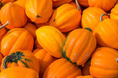 Orange acorn squash at market — Stock Photo