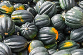 Acorn squash displayed at the market — Stock Photo