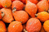 Orange hubbard squash at market — Stock Photo