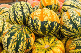 Carnival squash colorful display at market — Stock Photo
