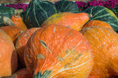 Orange hubbard squash on display at market — Stock Photo