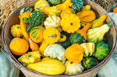 Basket of decorative gourds on display — Stock Photo