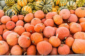 Golden Nugget Squash at the market — Stock Photo