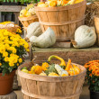 Gourds and flowers in fall display — Stock Photo