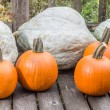 Pumpkins and blue hubbard squash — Stock Photo