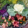 Ornamental planter with fall colors — Stock Photo